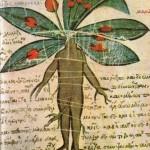 Precioso Herbanário médico catalogado pelo grego Dioscóride, na Antiguidade
