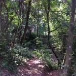 Um dos bosques da Escola, próximo às suas piscinas. (Foto: Duda Pimentel)